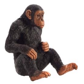 Animal Planet Šimpanz