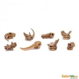 Safari Ltd - Tuba - Prehistorické lebky savců