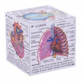 Didaktická kostka - Lidské tělo
