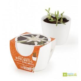 Mini zahrádka - Mini květináč Ceramic s protěží