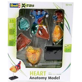 Revell X-ray SnapKits 02101 - model lidského srdce